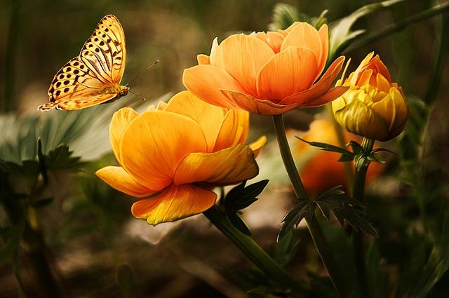 motýl nad květinami